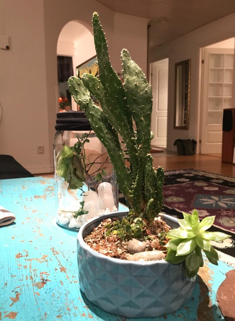 Mios kaktus